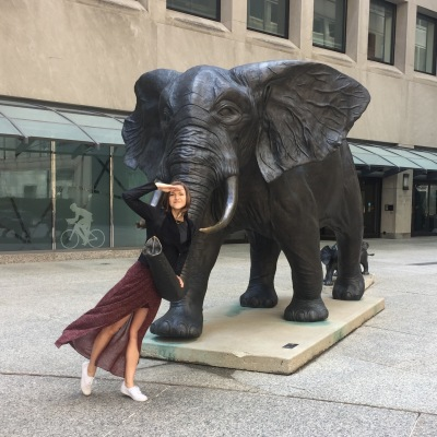 Elephants in the financial district...makes more sense than cows? We don't know.